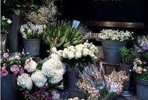 my dream flower shop