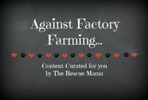Against factory farming... / This board is a collection of articles and resources on ending factory farming.