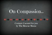 On compassion / This board is a collection of stories of humans helping animals that I curated for you!  Enjoy!