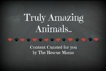 Truly Amazing Animals / This board is a collection of stories about truly amazing animals that I curated for you! Enjoy!
