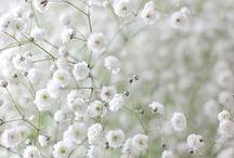 puutarhainspiraatiota  - garden inspiration / Kaikkea puutarhaan liittyvää. All about gardening.