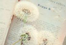tähtikukka - starflower / TähtiKukka löytää talon ja puutarhan. Hän löytää ullakolta kirjan, johon hän kirjoittaa voimarunoja. Voimarunot lennähtävät tähdenlentoina päätyikkunasta taivaan sineen ja leijuvat välkkyen puutarhaan muuttuen hiekkapoluiksi ja kukiksi. TähtiKukka lakaisee luudalla polkuja ja löytää runojen opastuksia. Hän saa voimaa uskoa unelmiinsa ja seuraa hiekkapolkua lammelle.  Siellä talo ja puutarha ovat syntyneet todeksi. Tule sinäkin lakaisemaan omat runolliset hiekkapolkusi.
