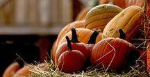 Autumn / All about my favourite season (colourwise)