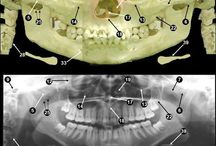 Dental Radiology / All things dental radiology- interesting xrays, anatomy, tips and tricks, and interesting facts