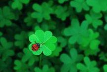 St. Patrick wasn't green!