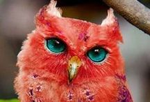 Outstanding Owls / #owls bring interesting things...