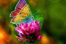 Butterfly Express / #Butterflies #fluttering.  #Butterfly.
