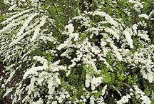 Fleurs et plate-bandes