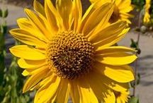 Ohio Wildflowers & Native Plants / Learn about native Ohio plants and the threat of invasive species at Stark Parks programs and online.