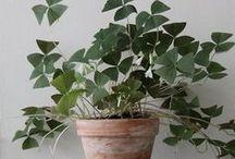 Huonekasvi-inspiraatiot - Indoorplant-inspiration / Inspiraatiota ja hoito-ohjeita huonekasveille. Inspiration, ideas and how to take care of indoorplants.
