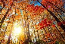 {fall} / by Lindsey Byrd