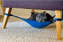 Cool Cat Products / Products designed to enhance your cat's quality of life