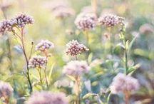 Bloom / by Greenius