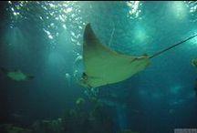 """Oceanarium w Lizbonie / Największe oceanarium w Europie, jedno z lizbońskich """"must see"""" - odkryj oceany światowe na wyciągnięcie ręki! Więcej info tutaj: http://infolizbona.pl/?p=1907"""