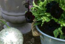 My garden - goth gardening