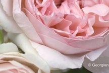 Beautiful petals