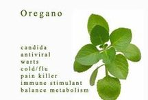OREGANO Essential Oil / Powerful anti-viral properties which BOOST IMMUNE SYSTEM & work as a NATURAL PAIN KILLER. ♦ Anti-inflammatory that reverses pain & inflammation with nearly the power of morphine as a painkiller. ♦   Oil Properties: Antifungal, antiseptic for Respiratory system, antibacterial, antiviral, antiparasitic, an immune stimulant. ♦ Some uses: Help with digestive problems, Cleanse gut bacteria, balance metabolism, fight off bacterial & viral infections, colds. / by Caroline