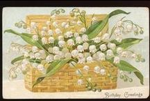 Lilly of the valley, muguet .