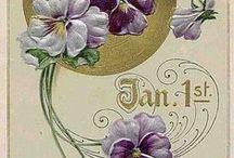 pansies, violets , viooltjes