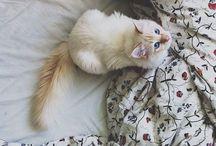 Furry Friends :: / Cutest pets ever.