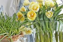 springtime bulbs
