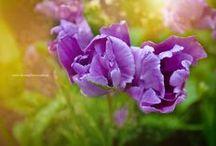 Nature / flowers, gardens, landscapes