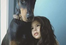 Dobe love / Dobermans and other dogs
