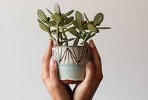 Plants + gardening :: / Inspiration from the joy of growing plants from zero.