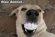 Animals with Braces