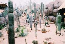 cactus & piÑas