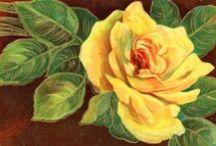 Vintage Flora / Vintage botanical images
