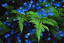 Botanical Beauty / Photography ... beautiful  gardens & floral arrangements.