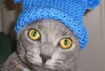 Beginner Easy Knitting / by Frugal Knitting Haus