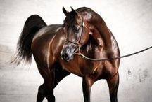 ❥ • • • Horses Of Course / Horses. Horses!
