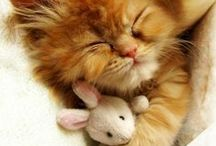 Adorable Cats and Kitties