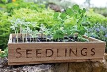 Homestead Gardens / Something to inspire you in the dirt