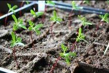 Garden / Homestead, Child-led Gardening