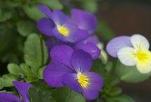 Botanical Beauty 3 / Still more beautiful backyards and colourful & interesting plants.