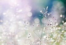 Nature et merveilles