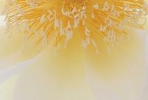 Flowers / by ayumi matsuoka