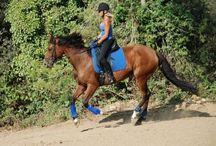 Horses!!