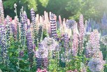 flower wishlist