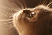 cat ฅ(⌯͒• ɪ •⌯͒)ฅ / by ayumi matsuoka
