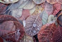 Soft Autumn / Soft Autumn examples and inspiration