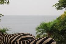 Kigoma safari