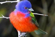 Nature lovely Birds / nature Birds
