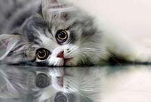 Reflection photography / Reflection