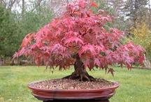 Beautiful ultra small Bonsai Tree photography / ultra small Bonsai Tree