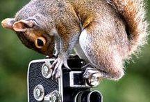 Macro world Photography / Macro Photography