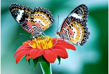 Butterfly & Flower photography / Butterfly & Flower